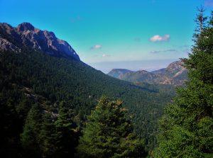 Der berühmte Tannenwald in der Sierra de Grazalema