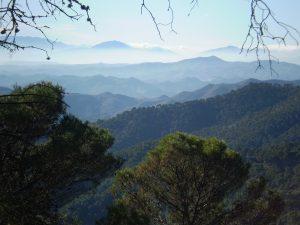 Wälder in den Montes de Málaga