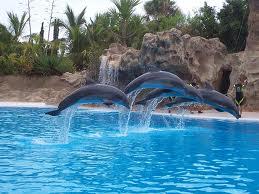 Springende Delphine im Selwo Marina