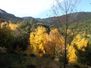 Laubwald im El Juanar