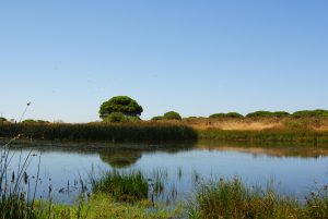 Lagune im Doñana Nationalpark