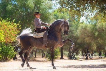 Pferde Urlaub in Andalusien