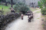 Wanderurlaub Aracena, Huelva, Andalusien Rundreise