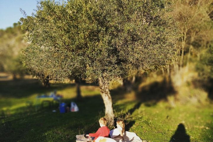 Sonntags Picknick mit der Familie